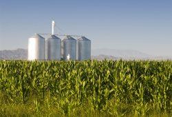 Agribusiness-Large